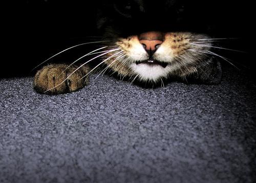 Cat Ready (photo by kissro)