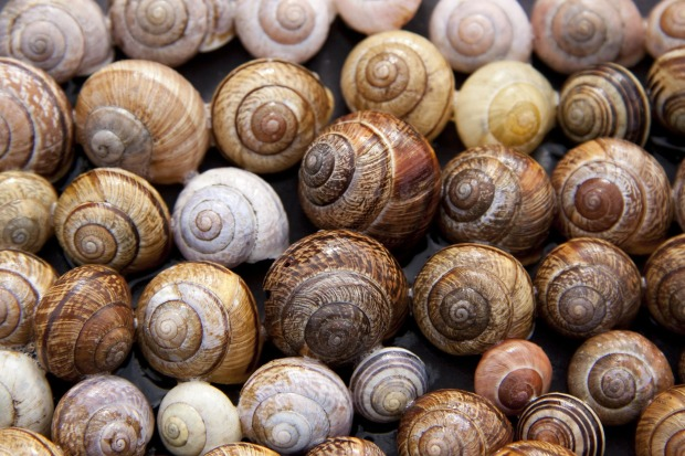 Individual and Diverse - Snail Shells
